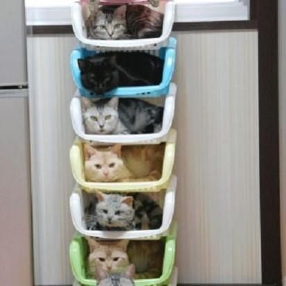 キジトラ白猫キジトラ猫黒猫サバトラ猫茶トラ猫