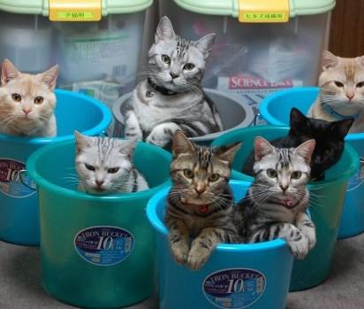 サバトラ猫キジトラ猫茶トラ猫
