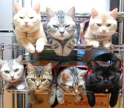 茶トラ猫キジトラ猫サバトラ猫黒猫