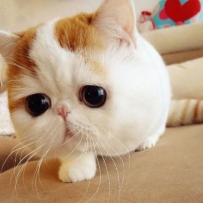茶トラ白猫ブサイク