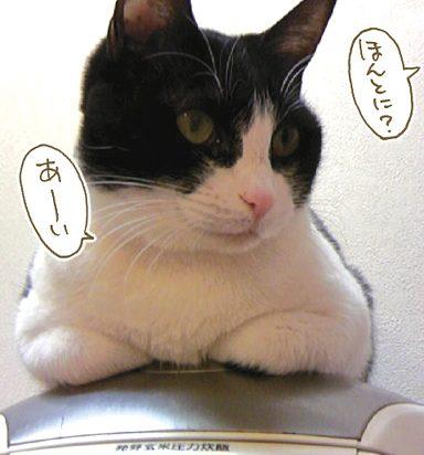 ハチワレ猫炊飯器