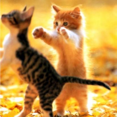 サバトラ白猫茶トラ猫子猫紅葉