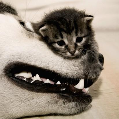 サバトラ猫子猫犬