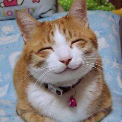 茶トラ白猫笑顔