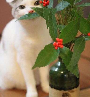 サバトラ白猫植物