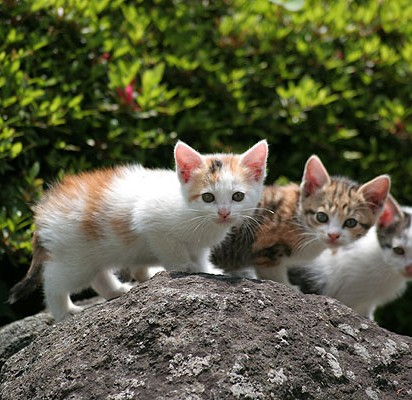 三毛猫サバトラ猫とび三毛猫子猫屋外