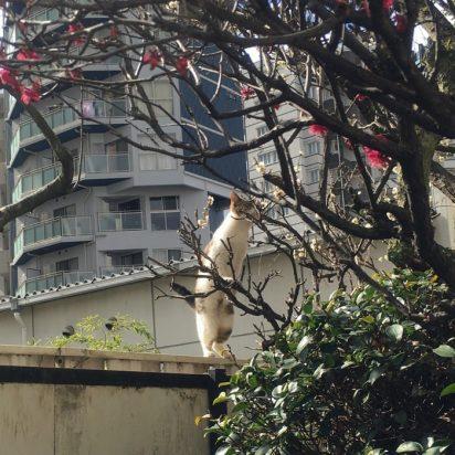 サバトラ白猫庭