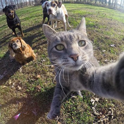 サバトラ猫犬自撮り風