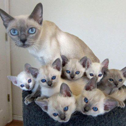 白猫子猫親子大量