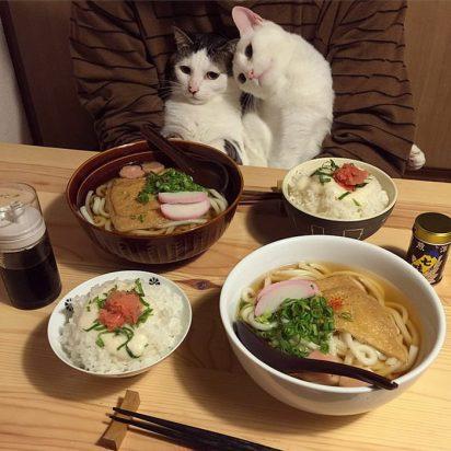 白キジトラ白2匹ご飯