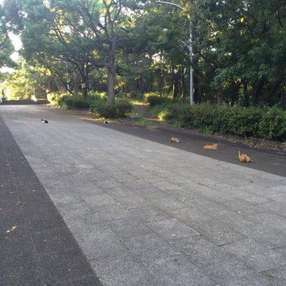 公園猫たくさん