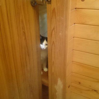 ドアの隙間から